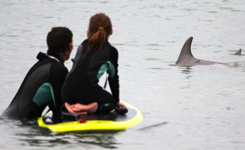 Dolphins at Lord Somers Camp